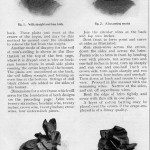 Correct Millinery for Mourning Wear, 1907