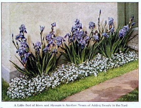 Flowers for a small yard, 1912